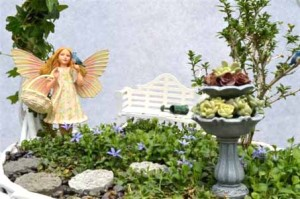 Fairy succulents