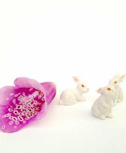 miniature bunnies