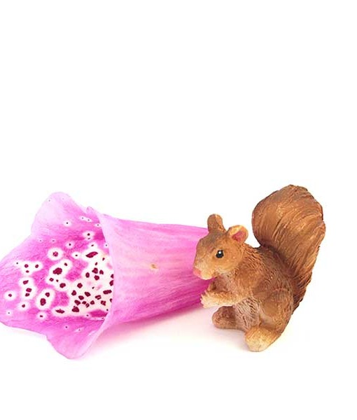 Miniature fairy garden squirrel