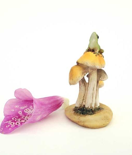 Frog king mushrooms
