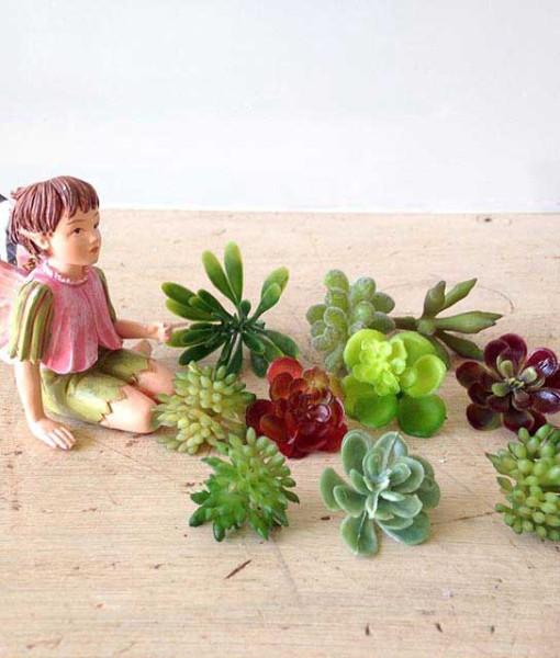 miniaturefairygardenplants5