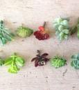 miniaturefairygardenplants6