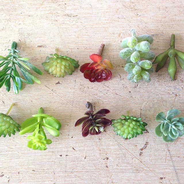 Miniature fairy garden plants fairy garden expert - Miniature fairy garden plants ...